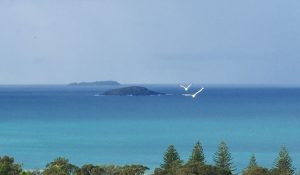 Islands off the coffs coastline